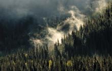 Utreder skogselskaper
