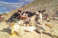Uppsalaforskare deltar i dinosaurieexpedition i Patagonien