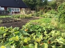 Lyckat pilotprojekt för nyanlända i Alnarps rehabträdgård fortsätter