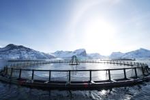 Importforbud for norsk sjømat