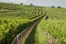 Certifierat hållbar vingård lanserar nytt vin i Sverige