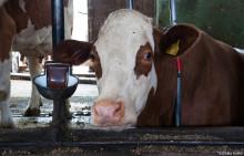 8. Berliner Milchforum: Eine Plattform für mehr Tierwohl?