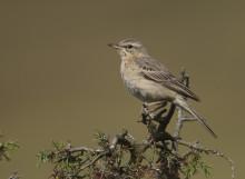 Hotade arter har gynnats av insatser i sandmarker