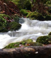 Skånska Energi säljer sina vattenkraftanläggningar i Rönne å