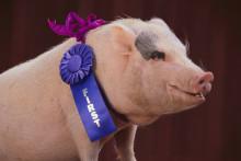 Förslagslådan är öppen för nomineringar i Stora pr-priset 2011