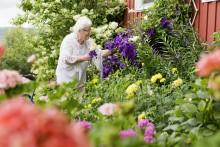 Vård och omsorgsförvaltningen satsar på seniora sommarvistelser.