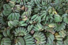 Schyssta bananer, men klarar de ensamma klimatkampen?