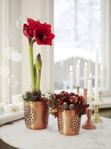 Koppartrender och ombonad julkänsla i Interfloras julsortiment