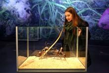Carolas Garten: überdimensionale Insekten im Panometer Leipzig