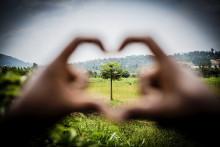 Nio nya träd i minuten i östra Afrika