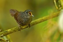 Forskare presenterar nytt släktträd för alla världens småfågelsfamiljer