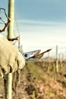 Vinskola del 11: Arbete i vinodlingen – olika moment på vinberget