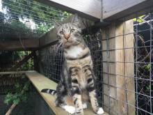 Har du modtaget en SMS fra Kattens Værn?