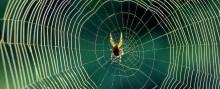 Antallet af edderkopper i hjemmet stiger lige nu - Sådan undgår du mange af dem