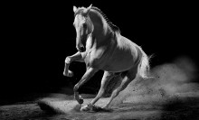 Idag startar Gothenburg Horse Show – Got Events egna världsevenemang