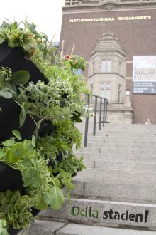 Låt den grå betongen blomma i grönt - Odla staden ny utställning om stadsodling