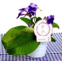 Dagens Rosa Produkt 5 oktober - en Kornettblomma från Mäster Grön