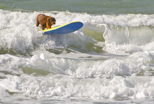 Pooch power exerts influence on high demand for UK holidays