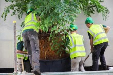 Rescued tropical plants arrive at Woburn Forest
