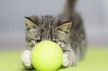 Ny kattförsäkring med marknadens högsta ersättning