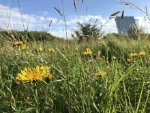 Naturen har sejret på Amager Fælled - men kampen fortsætter