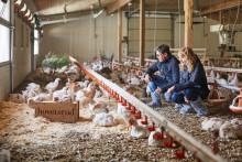 KIWI tester økologisk kylling