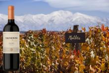 Trivento Golden Reserve Malbec 2017 - Blant de 50 beste argentinske viner i år