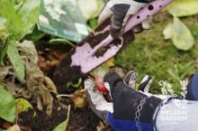 Dags att gräva ner höstlök för en blommande vår