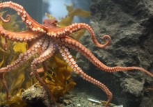 ISO 22301 and the business continuity octopus