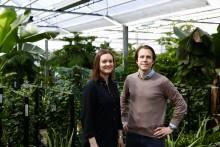 Växter för hjärnans skull – Hässelby Blommor i nytt samarbete inom Neurodesign