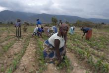 ActionAid uppmanar att stödja kvinnorna i kampen mot hungern