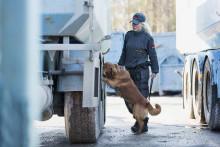 Hundförare: Att arbeta med människans bästa vän