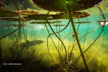 Föreläsning: Sötvatten – en värld av liv