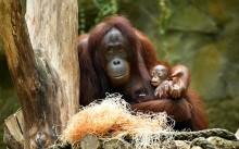 Die Fröhliche - Hsiao-Nings Baby auf den Namen Niah getauft
