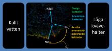 Ny SVU-rapport: Användning av Anammox för en förbättrad kväveavskiljning vid avloppsverk (avlopp och miljö)