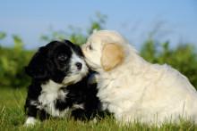 Visa respekt för pälsdjursallergiker