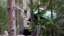 Både samhälle och skogsbruk blir vinnare med mer skogsgödsling