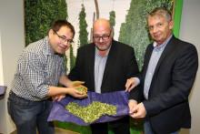 Grünes Gold: Hopfen aus der Hallertau verfeinert das Paulaner Bier