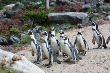 Großes Zoofest zur Polarium-Eröffnung am 23. September 2018