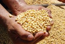 Menigo köper RTRS-certifikat för hållbar sojaproduktion