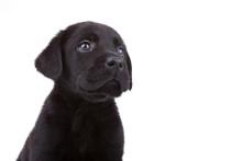 Hundförsöket på Göteborgs universitet uppmärksammas internationellt