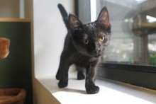 5 gode grunde til at adoptere en sort kat!