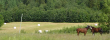 KSLA välkomnar nya ledamöter i Jordbrukssavdelningen