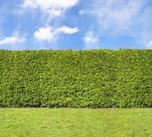 Branch out on your hedge skills
