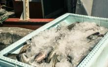 Klart med nästa års fiskekvoter i Östersjön