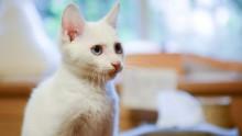 Att ta hem sin kattunge – 5 tips från Mjau