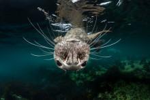 Les photographes français triomphent au concours Open des Sony World Photography Awards 2019