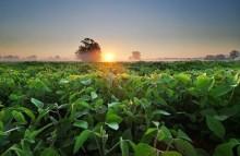 Skånemejerier första företaget i Sverige som stödjer GMO-fri sojaproduktion via RTRS-certifikat