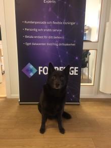 Nyanställning av två drifttekniker och kontorshund