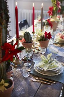 Den heliga nattens blomma - julstjärnan och dess mexikanska arv